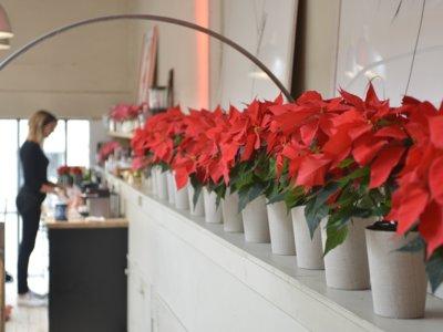 ¡La Poinsettia será protagonista! Descubrimos las tendencias decorativas de Navidad en París