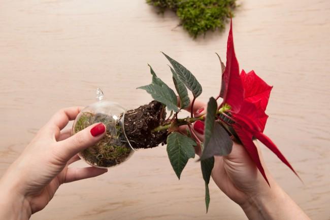2 Von 4 Christbaumkugel Mit Dem Weihnachtsstern Schritt 2 Es