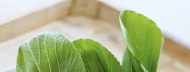 Pak choi, la col asiática que parece una acelga: cómo usarla en la cocina