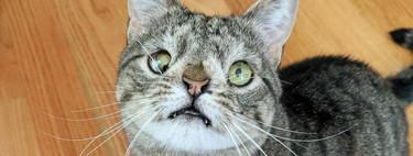 Los gatos con síndrome de Down no existen, pero su éxito en Internet sí y es todo un negocio