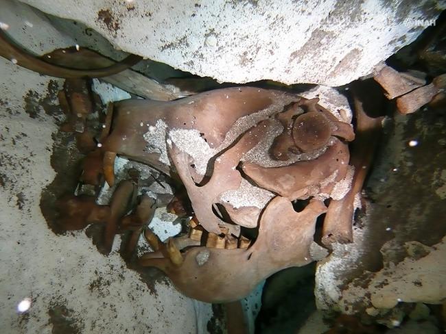 En cueva submarina de Quintana Roo, descubren nueva especie de perezoso gigante