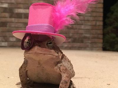 Una rana acudía a la casa de un señor todos los días. Así que este hizo lo más razonable: ponerle sombreros