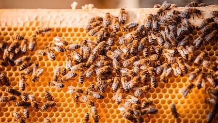 Caballos salvajes, abejas y deportivos. Lo último de Porsche es miel natural pura de la Granja San Leipzig