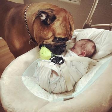 La emotiva demostración de amor de un perro al nuevo bebé de la casa: le da su juguete favorito cada vez que llora