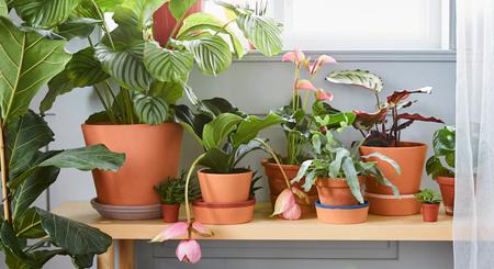 14 macetas y soportes para plantas de Ikea para que tu terraza sea un vergel