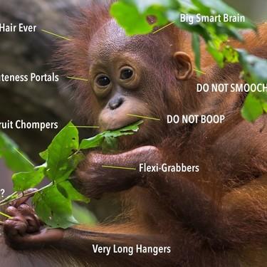Hay un meme para explicar la anatomía de cada animal