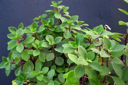 Las once mejores plantas de interior Plantas de interior duras