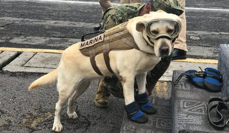 Frida, la perra heroína que ha salvado la vida a decenas de personas en los terremotos de México