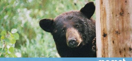 Qué hacer si te topas con un oso en medio del bosque: manual de instrucciones para salir con vida