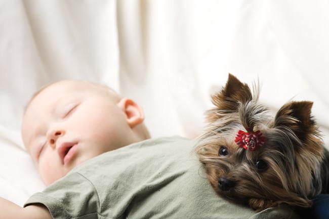La hora de los perros: un hospital de Madrid permite que los niños reciban la visita de sus mascotas