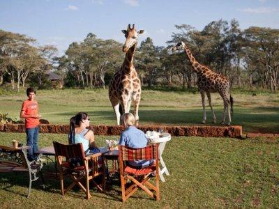 Tres hoteles en los que los animales salvajes son (inevitablemente) tus compañeros de estancia