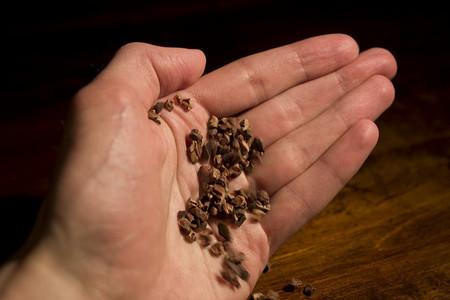 """""""Cacao nibs"""" la forma mas saludable de comer chocolate"""