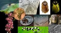 Top 10 de las especies más extrañas halladas en 2012