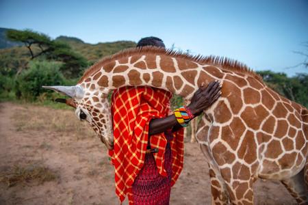 Vitale Giraffe