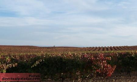 Visita a bodegas Viyuela en la D.O. Ribera de Duero