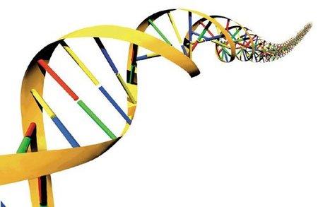 Exégesis forense de un libro: paralelismos con el ADN
