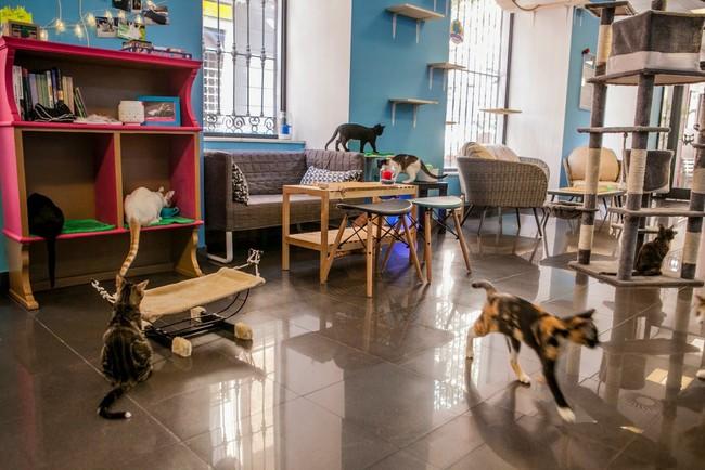 Ruta De Cat Cafes Por Espana