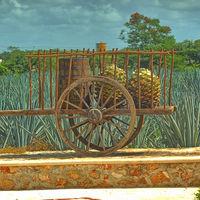 Visita la Ruta del Tequila