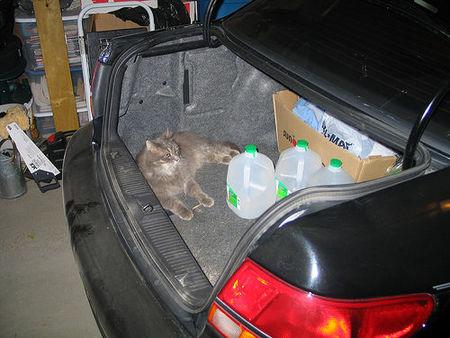 Revisa el estado de tu maletero y ahorrarás gasolina