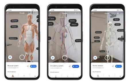 Cuerpo Humano Google Ar