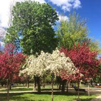 ¿Sufres astenia primaveral? Te doy 9 fórmulas para renovar la energía y disfrutar a tope lo que está por llegar