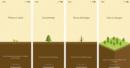 Forest Aplicacion Productividad