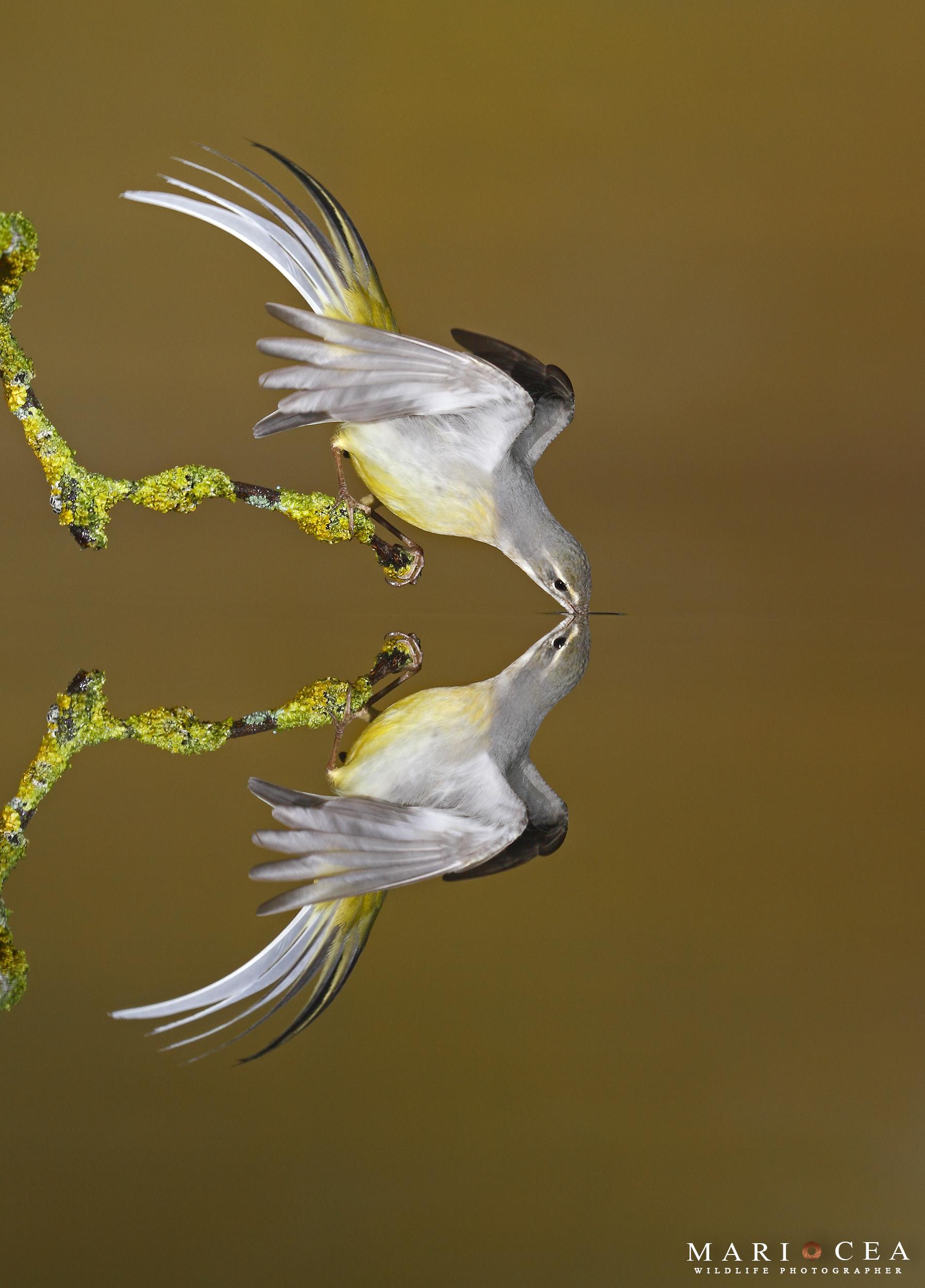 Foto de Fotografías de naturaleza tomadas por Mario Cea (11/12)