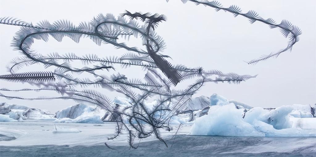 'Ornitografías', una serie de Xabi Bou que convierte el vuelo de las aves en una suerte de poesía visual