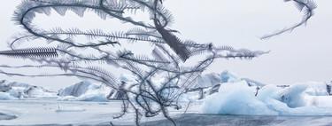 'Ornitografías', una serie de Xavi Bou que convierte el vuelo de las aves en una suerte de poesía visual