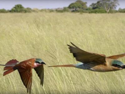 El espectacular trailer de la segunda entrega de 'Planeta Tierra', la imagen de la semana