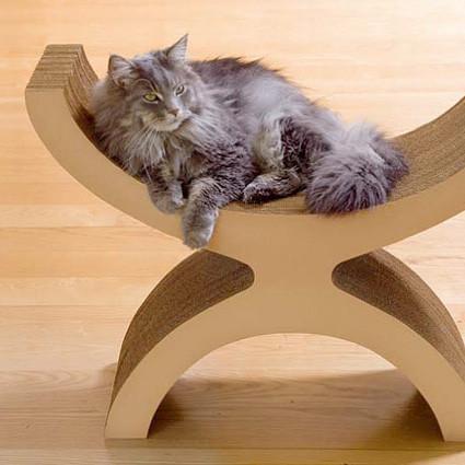 cama gato