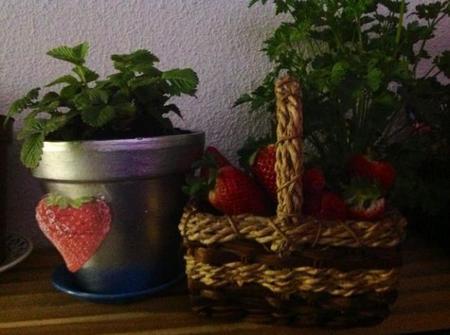 fresas-portada.jpg