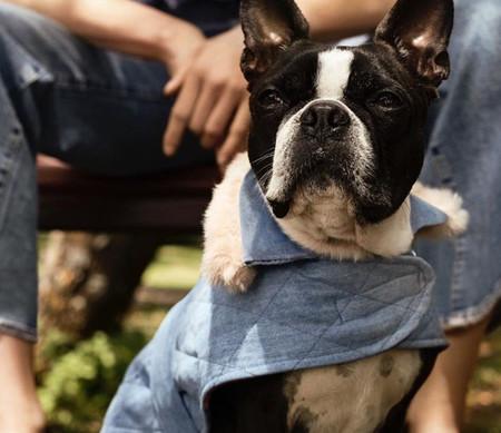 H&M presenta su colección de ropa para perros (y no podemos dejar de pensar en los twinnings más ideales)