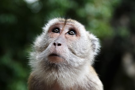 Los cinco malentendidos más comunes sobre la evolución