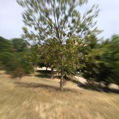 Foto 7 de 26 de la galería fotos-nubia-z17mini en Xataka Android