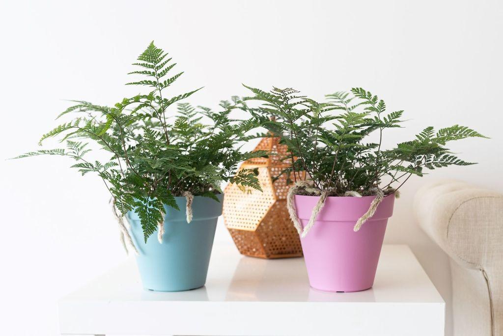 Llegan las plantas inteligentes que se comunican con sus dueños para ayudarle a cuidarlas bien
