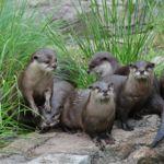 Visita gratis el zoológico de Washington