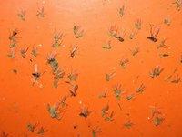 Cómo protegerse de los mosquitos durante el embarazo