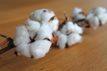 Cotton Branch 1271038 1280