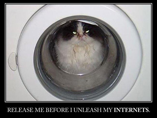 internet gato meme