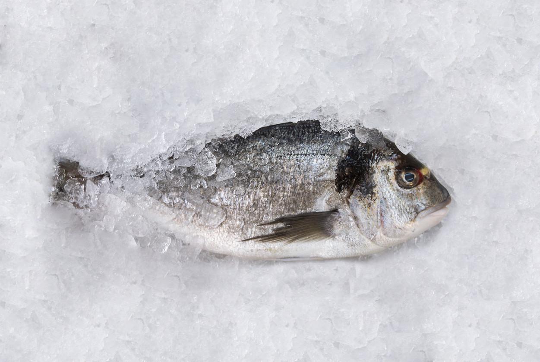 anisakis bacalao desalado