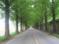 Árboles para reducir la velocidad