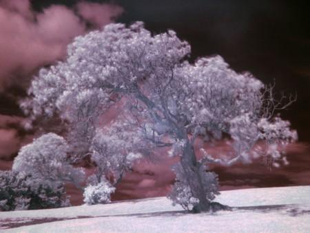 Tree Example