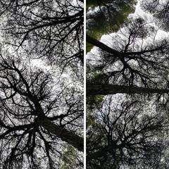 Foto 7 de 9 de la galería lg-g6-camara-principal-vs-angular en Xataka