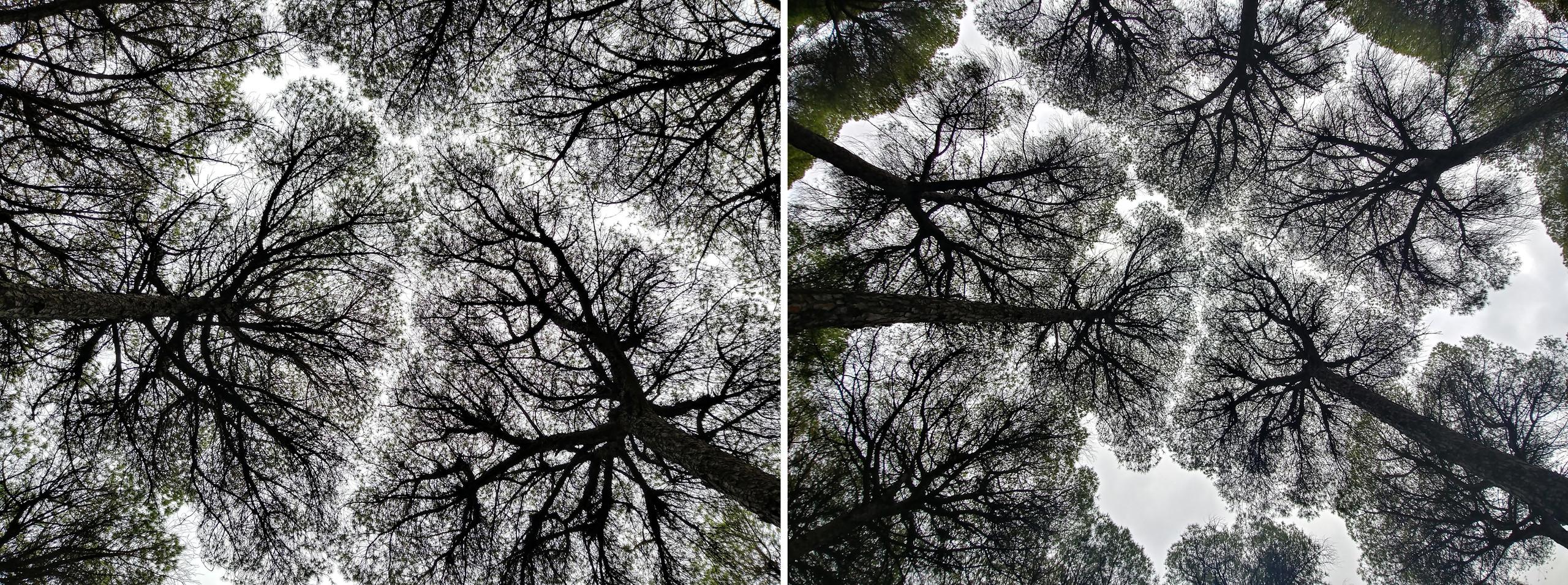 Foto de LG G6: cámara principal vs angular (7/9)