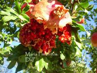 Granada, un antioxidante natural