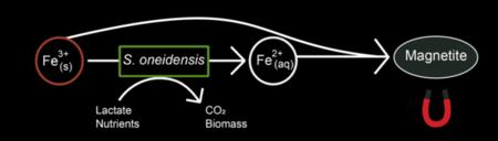Csm Reactie 30c03a43ae