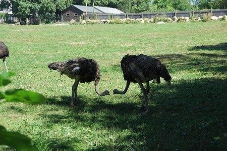"""Los """"avestruces"""" en las empresas"""