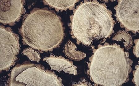 Crean un bioplástico basado en madera y capaz de degradarse por completo en tres meses