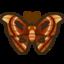 Nh Icon Atlasmoth